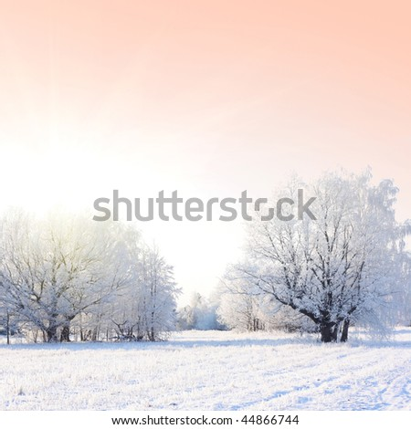 Frozen trees and pink sky with sunlight - stock photo