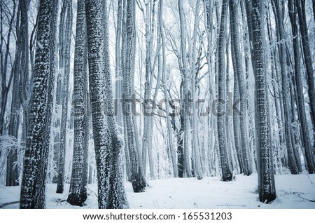 frozen trees in a cold forest in winter - stock photo