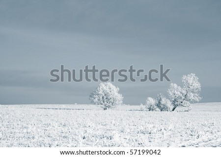 Frozen trees on snowy field - stock photo