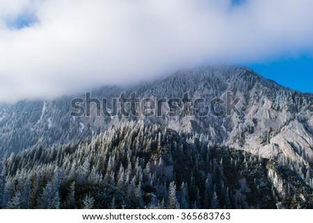 Frozen vegetation on mountain peaks - stock photo