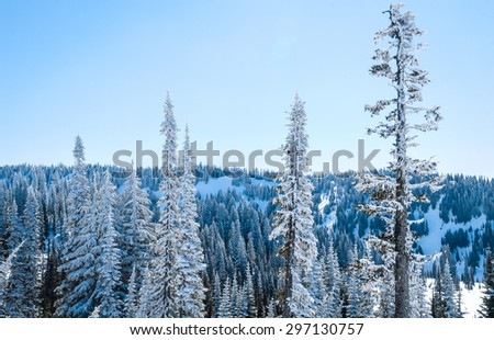 Frozen View of Mount Rainier National Park - stock photo