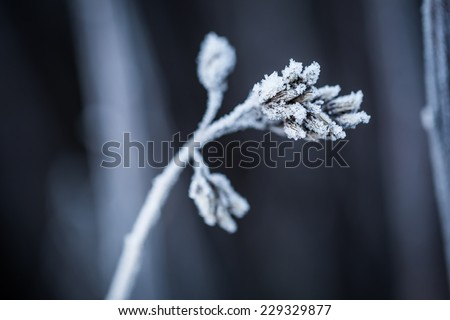 frozen winter - stock photo