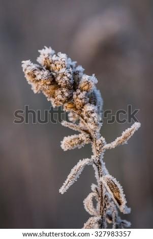 frozen winter - stock photo