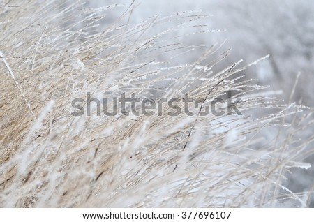 Frozen winter grass background on a very cold winter day - stock photo