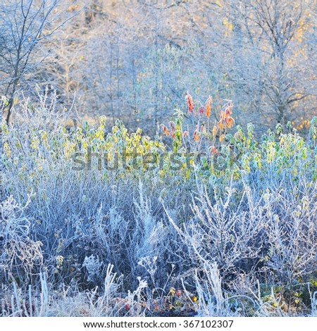 Frozen winter trees with the hoar-frost - stock photo