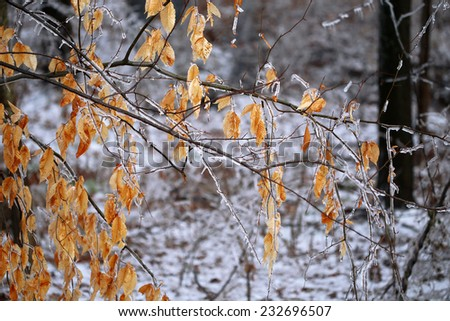 frozen yellow leaves - stock photo
