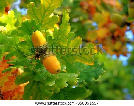 Fruit - stock photo