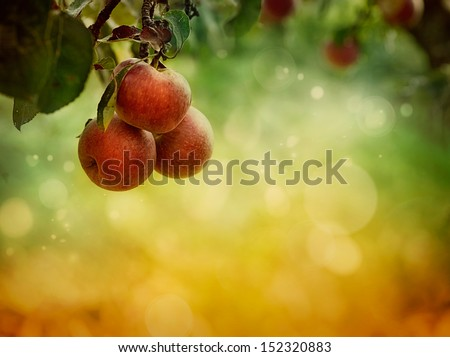 Fruit background. Apples in autumn bokeh background - stock photo