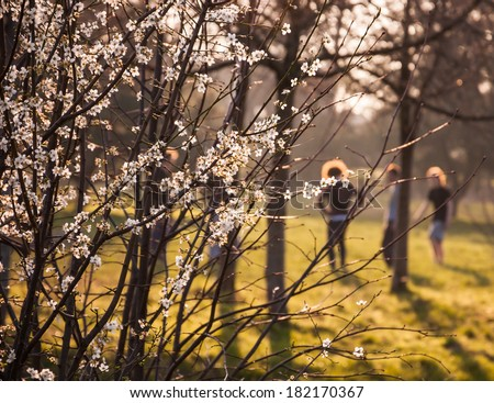 Fruit tree blossoms and the figures of the adolescences at background. Golden evening light. Youth concept. Metaphor of new life. Selective focus. - stock photo