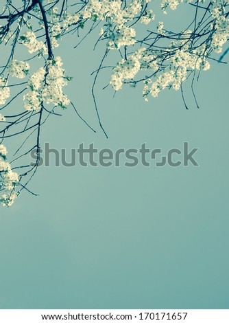 Fruit tree blossoms - spring beginning. Aged photo.  - stock photo