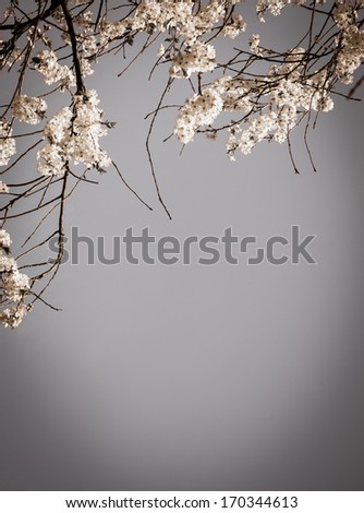 Fruit tree blossoms - spring beginning. Selective focus and shallow depth of field. Aged photo. Shadowed angles. Retro style greeting card.  - stock photo