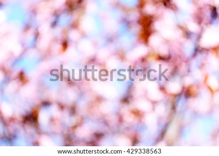 Fruit tree flowers in blossom on blurred sky background - stock photo