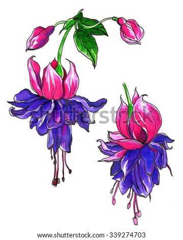 Fuchsia tropical flowers for wedding printing products: cards, invitations, menu. Hand drawn watercolor flower isolated on white background. Botanical illustration.  - stock photo
