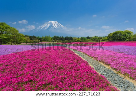 Fuji with the field of pink moss at Shibazakura festival, Yamanashi, Japan - stock photo