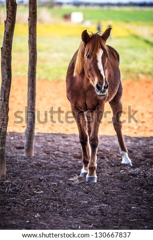 Full body picture of horse - stock photo