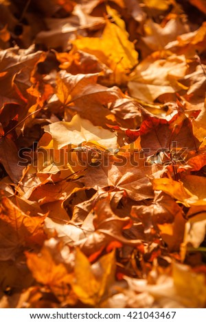 Full frame selective focus on a floor covered with autumnal leaves in the dusky rays of the late afternoon sun. - stock photo
