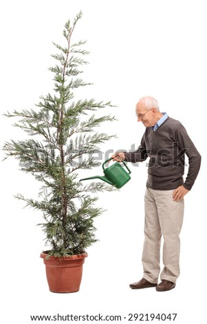 Full length profile shot of a casual senior watering a coniferous tree in a pot isolated on white background - stock photo