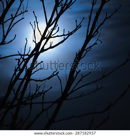 Full moon in foggy dark night, naked leafless trees silhouettes and clouds, halloween theme background, scary moonlight scenery - stock photo