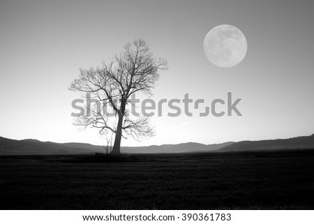 full moon over the oak tree, abstract black and white background  - stock photo