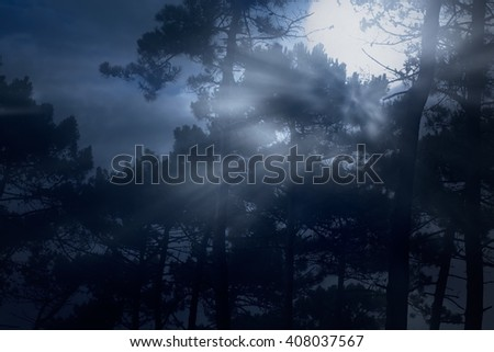 Full moon rising in the forest on a misty night - stock photo