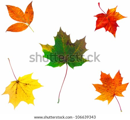 Full-size composite photo of various autumn leaves isolated on white background - stock photo