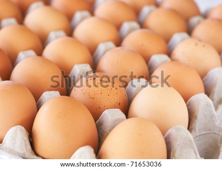 Full tray of freshly laid free range organic eggs - stock photo