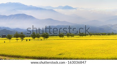 Full view of beautiful paddy place for adv or others purpose use - stock photo