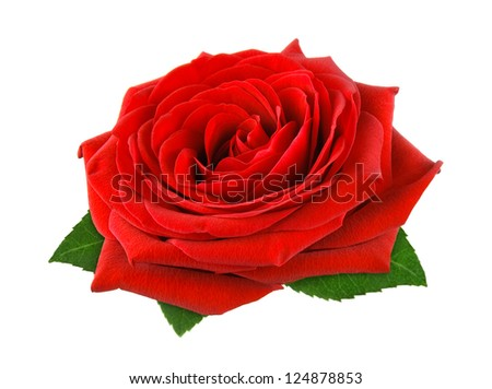 Fully blossomed, gorgeous red rose with leaves on pure white background - stock photo