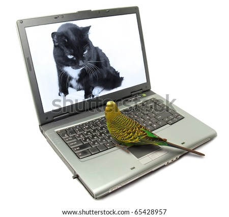Fun animals concept: Parrot and cat chatting on internet - stock photo