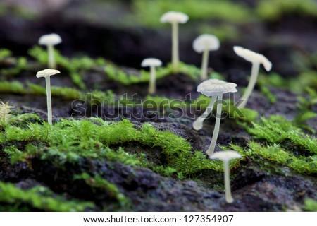 Fungi - stock photo
