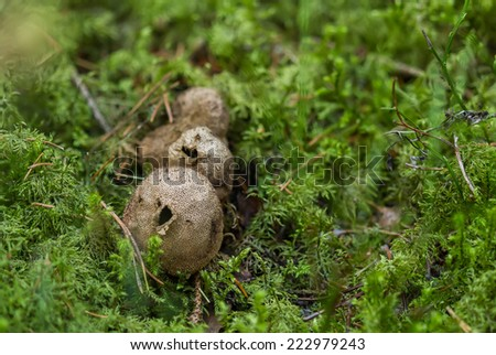 Fungi that cause dust - stock photo