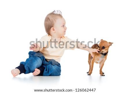 funny baby boy and dog isolated on white background - stock photo
