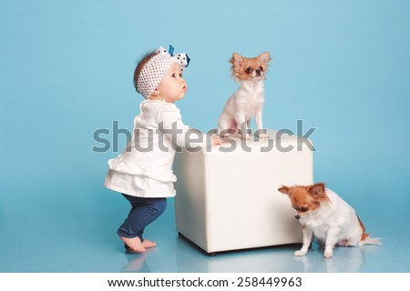 Funny baby girl playing with two chihuahua in room over blue. Wearing stylish dress. Friendship. Togetherness. Childhood. - stock photo