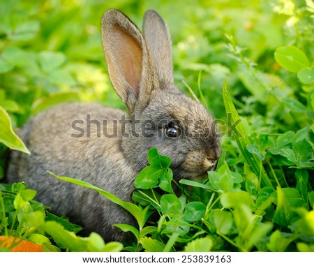 Funny baby gray rabbit on grass - stock photo