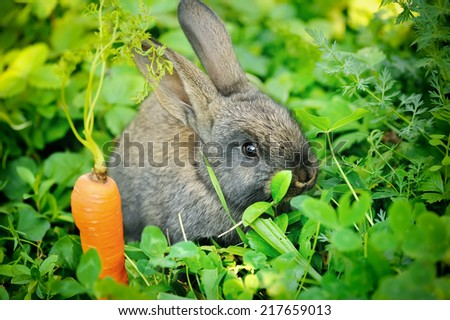 Funny baby gray rabbit with a carrot in grass - stock photo