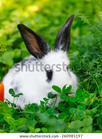 Funny baby white rabbit with a carrot on grass - stock photo