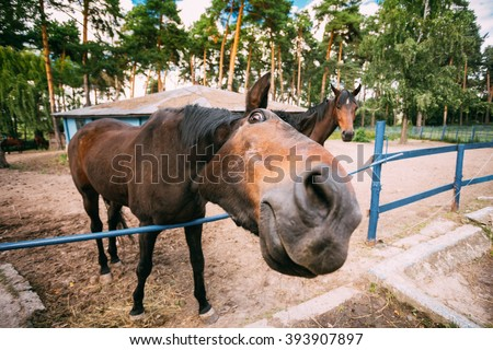 Funny Brown Horse Photographed A Wide Angle Lens - stock photo