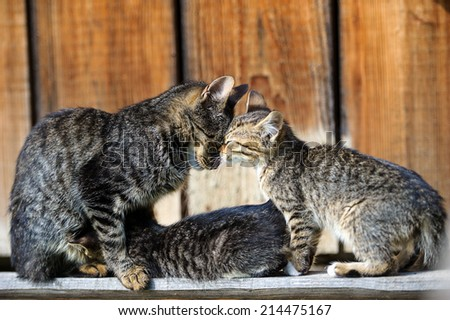 Funny cat and kitten - stock photo