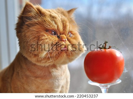 Funny cat and red tomato - stock photo
