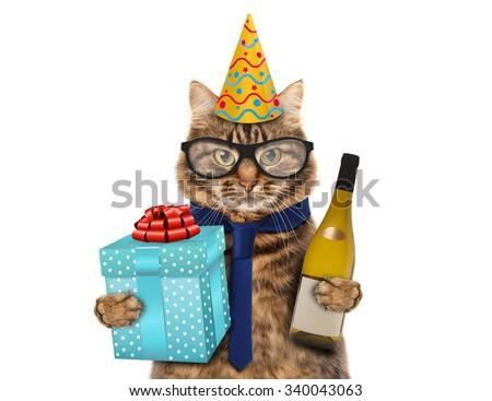 Funny cat celebrates birthday  - stock photo