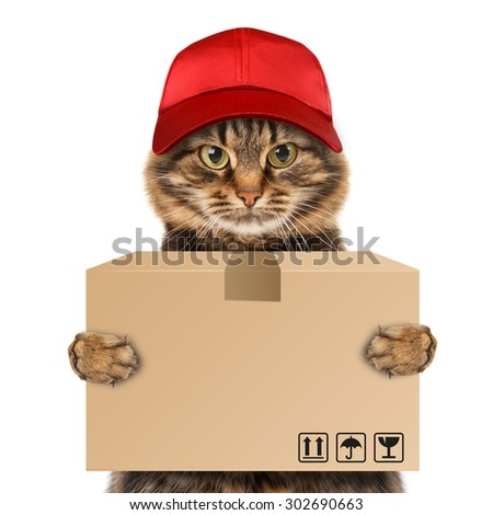 Funny cat - delivery service. Postman cat delivering a big package - stock photo