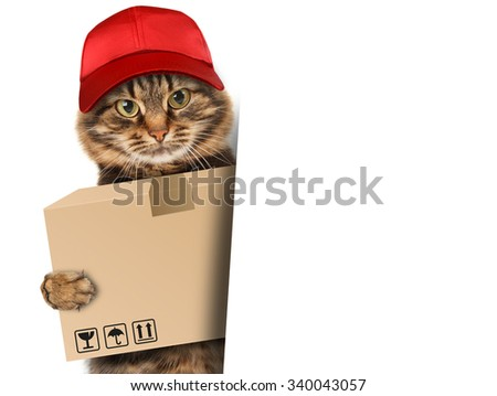 Funny cat - delivery service. Postman cat delivering a big package.  - stock photo