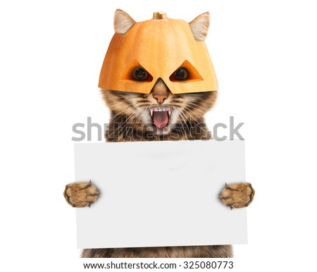 Funny cat in halloween mask - stock photo