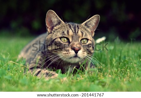 Funny cat in the garden - stock photo