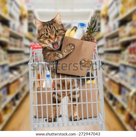 Funny cat in the store - stock photo