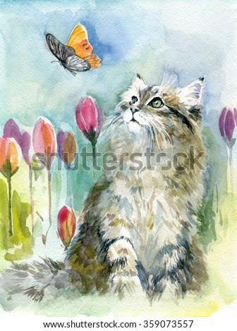 funny cat, Kitty, pet, animal,  - stock photo