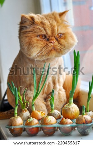 Funny cat with green onions and looking out the window - stock photo