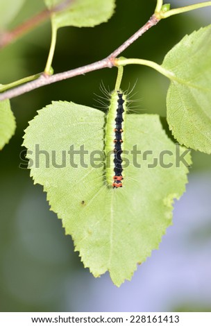 Funny caterpillar on leaf - stock photo