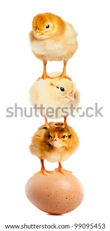 Funny chickens created a pyramid of gymnasts. Isolation. - stock photo