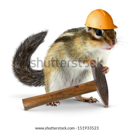 Funny chipmunk builder, reconstruction worker concept - stock photo